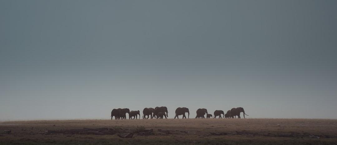 elephantqueen1